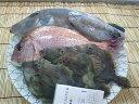 鮮魚☆カンタン☆何が入っているかお楽しみ!!「昼網の魚たち」 由良の昼網のお魚介類盛り合わせ