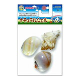 ヤドカリの成長に合わせてサイズが選べる天然の貝ですナチュラルシェル M YD−76【RCP】