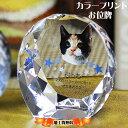 ペット仏壇 父の日×ポイントアップ祭