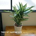 幸福の木70 光触媒 イミテーショングリーン(Imitation Green) デザインインテリア