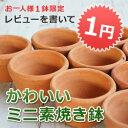 【レビューを書いて1円】ドイツ/日本/タイ製素焼き鉢 ≪植木鉢/陶器/テラコッタ・素焼き鉢系≫