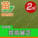 /代引不可/送料無料/姫高麗芝(張り芝用) 宮崎産 2平米(0.6坪分) 園芸