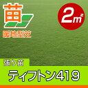 /代引不可/送料無料/ティフトン419(張り芝用) 宮崎産 2平米(0.6坪分) 園芸