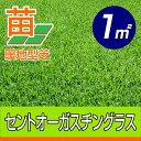/代引不可/送料無料/セントオーガスチングラス(張り芝用) 宮崎産 1平米(0.3坪分) 園芸