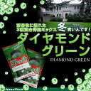 /耐暑性に優れた特選ミックス/ダイヤモンドグリーン 1kg入りバロネス寒地型芝の種 お庭の広さ6?7