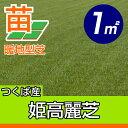/代引不可/送料無料/姫高麗芝(張り芝用) つくば産 1平米(0.3坪分) 園芸