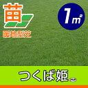 /代引不可/送料無料/つくば姫(姫高麗芝)(張り芝用) つくば産 1平米(0.3坪分) 園芸