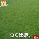 つくば姫(姫高麗芝)(張り芝用) つくば産 2平米(0.6坪分) 天然芝 園芸 暖地型芝 芝生の苗 送料無料