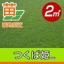 /代引不可/送料無料/つくば姫(姫高麗芝)(張り芝用) つくば産 2平米(0.6坪分) 園芸