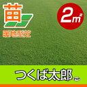 /代引不可/送料無料/つくば太郎(野芝)(張り芝用) つくば産 2平米(0.6坪分) 園芸