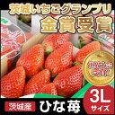 いちご イチゴ ギフト 贈答 ひな苺 3L×4パック プチギフト 大粒 苺 ストロベリー スイーツ 新鮮 果汁 いちご農家 いちご狩りの深作農園