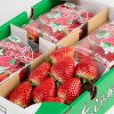水果 - いちご スイーツ キングベリー (3L 12個~8個入)×4パック プチギフト 大粒 苺 ストロベリー プチギフト 高級