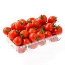 トマト 高糖度 フ...