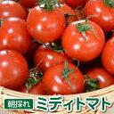 トマト ミディトマト 1.5kg ギフト プチギフト トマトジュース にも 最適な フルーツトマト 食塩無添加 美味しさに 訳あり
