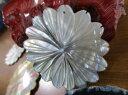 白蝶貝 大きな大きなペンダントトップ 菊(きく) 48mm南太平洋海からの贈り物マザーオブパール夏の白いワンピース・チュニック・トップスに映えます! テーマはフラワー・花・さくら・菊・ばら・バラ・薔薇です♪