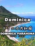 ドミニカ・パラオナ(200g)
