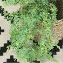 【いなざうるす屋】フェイクグリーン 元祖モフモフ【いなざうるす グリーン 緑 葉 葉っぱ はっぱ フェイク ガーランド 人工観葉植物 壁掛け インテリアグリーン ミニ 造花 観葉植物 おしゃれ かわいい 北欧 ナチュラル 雑貨 壁 飾り インテリア DIY】