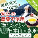 【国産 宮崎県産】日本山人参 ティーバッグ1.5g×20包