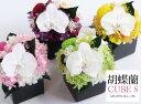 全4色・希少な胡蝶蘭のプリザ・360°楽しめるオールラウンド型! お祝い、お悔やみ問わず人気です。