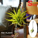 エアープランツS(AIR PLANT S) 光触媒 イミテーショングリーン