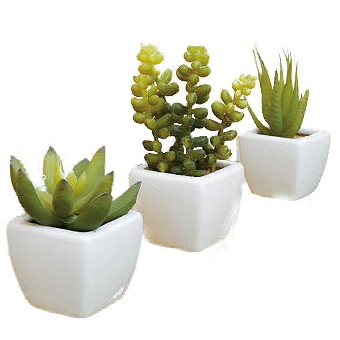 空間を選ばず飾れるサイズが魅力アクセント植物3点セット多肉植物光触媒イミテーショングリーン日本製
