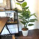 お部屋の印象をグーンとUP♪ フレッシュポトス115(Fresh pothos) 光触媒 イミテーショングリーン 日本製 送料無料