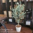 洗練されたインテリア空間をプロデュース! ユーカリ125(Eucalyptus) 光触媒 イミテーショングリーン 日本製 送料無料
