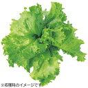 【あす楽対象】 ユーイング 水耕栽培種子 レタス(グレートレイクス) 「GreenFarm」 UH-LA01