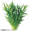 【あす楽対象】 ユーイング 水耕栽培種子 水菜 「GreenFarm」 UH-LB02