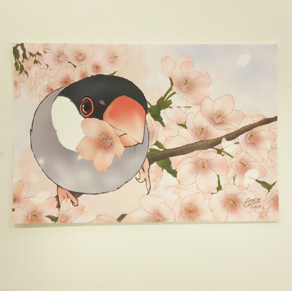 【とっ・とっ・pi♪】ポストカード・さくらサクラ桜文鳥/197A0104◆クロネコDM便可能