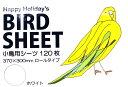 HHJ / 小鳥用シーツ 120枚入り・ホワイト ( 鳥 とり トリ 鳥用品 鳥グッズ インコ オウム あす楽 )