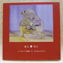 だが屋 / 写真同人誌・きん★ちり / 083A0281 ネコポス 対応可能 ( BIRDMORE バードモア CRAFT GARDEN 鳥用品 鳥グッズ 雑貨 グッズ ..