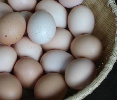 【庭鶏の玉子】1ケース(6ヶ入り)鶏卵