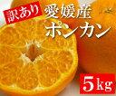【訳あり】愛媛産ポンカン・5kg(40〜55玉)『甘みと香りが濃厚な人気の柑橘!』【送料無料】[お届け期間:1月中旬〜]