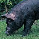 【お中元にも!】沖縄・やんばる島豚・やんばる豚セット(しゃぶしゃぶ&ロース)【送料無料】