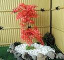 モミジレッド 高さ100cm (造花 人工観葉植物 紅葉 和風 ガーデニング 造園 庭園 坪庭 エクステリア)