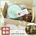 【送料無料】SABOTEN BABY!【さぼてん/栽培セット/栽培キット/プチギフト】