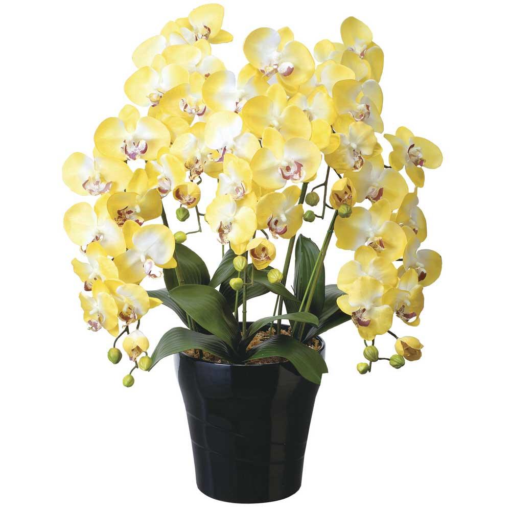 造花アート・胡蝶蘭 クイーン胡蝶蘭5本立Y ※抗菌、消臭、防汚などに効果のある光触媒人工植物【送料・立札orメッセージカード無料】 ハイクオリティな高級造花は、水やりなど面倒な日頃のお手入れは不要です。空気や空間を明るくきれいにする高級造花はオススメです。