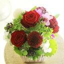 アレンジメントフラワーSSサイズ Vivid Red(赤系)※デザイナーが手がけるお洒落な一品。出産祝い、誕生祝いなど、出産や誕生のお祝いに関する贈り物に【送料・メッセージカード無料】【あす楽】
