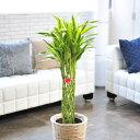 開店祝・開業祝・就任祝・移転祝・お誕生日・還暦祝いに産直観葉植物を【全国送料無料】