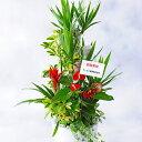 産直!観葉植物寄せ植え 10号※陶器鉢仕様 【送料無料】【楽ギフ_メッセ入力】