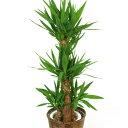 平日17時までのご注文で当日配送可能な植物です【送料無料】