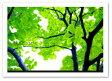 A2サイズ ポスター 【Bulle verte】 インテリアポスター フォト おしゃれ/植物,花 Interior Art Poster