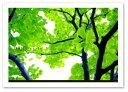 ポスター 【Bulle verte】 A2サイズ インテリア フォト おしゃれ 植物,花 Interior Art Poster