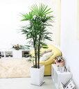 【送料無料】スタイリッシュ!シュロ竹(シュロチク) 10号+ホワイトロング陶器鉢(スクエア形)