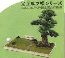 ゴルフ松(大型)