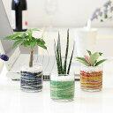 カラーサンド植え ミニ観葉植物 ガラス容器 3鉢セット【種類も色もよりどり選べる福袋Cセット】 「ハイドロカルチャー」
