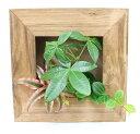 壁掛けインテリア!ミニ観葉植物 A 容器の色 ブラウンタイプ