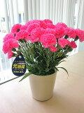 光触媒 カーネーション ピンク アートフラワー  ミニ 空気清浄機 造花 アレンジ 母の日 ギフト プレゼント 贈り物