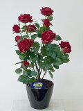 """""""超質感""""光触媒アートフラワー(造花) ばら(バラ・薔薇)1本立ち(レッド)生花と間違えるほどのリアルな質感をぜひ体験してください。贈り物・母の日・新築祝・開店祝・誕生日・記念日・"""